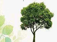 Comemoração do Dia Mundial da Árvore em Miranda do Douro